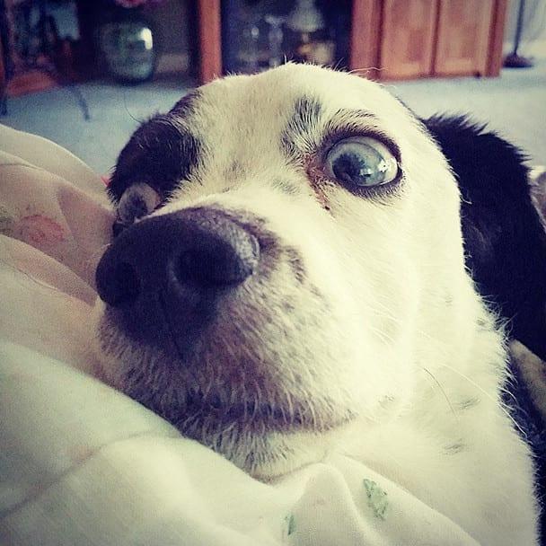 Instagram / scooter_blue_eyes