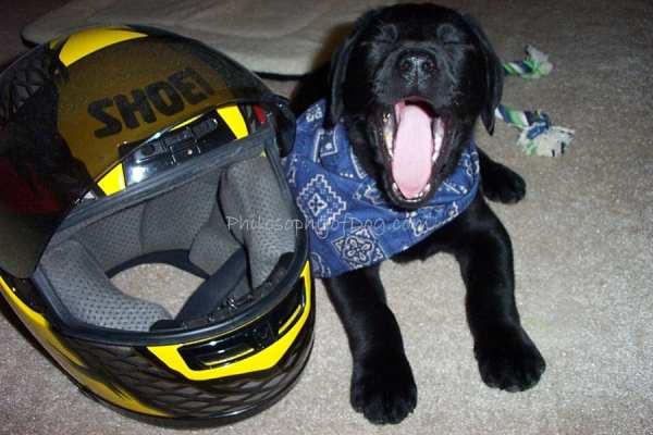 Jet Puppy Copyright to PhilosophyofDog.com