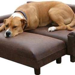 Dog Furniture Bed