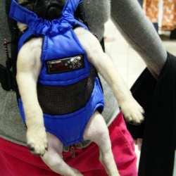 Doggie Bjorn