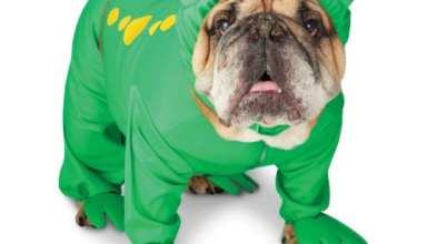Big Dog Frog Costume