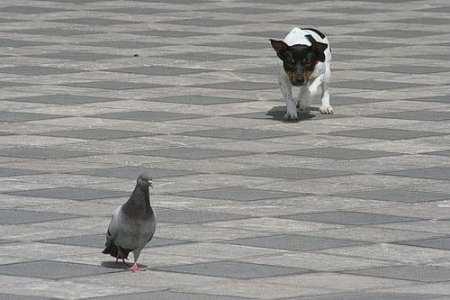 Stalking Behavior in Dogs