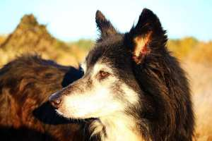Things Your Senior Dog Wants You To Know