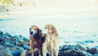 10 Ways That You Can Help Your Partner With Your Senior Dog!