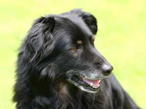 How to Assess Your Senior Dog's Quality of Life
