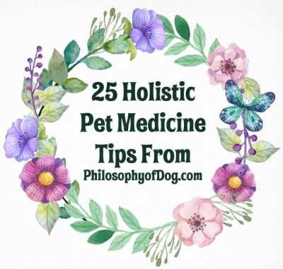 Holistic Pet Medicine Tips