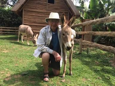phil uganda donkey