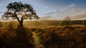 Dawn across park