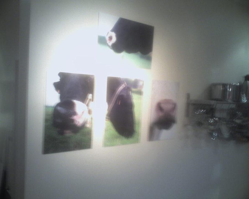 Nouvelle expo photos à la maison