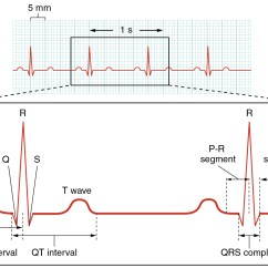 Mechanical Wave Diagram 3 Phase Generator Alternator Wiring Cardiac Muscle And Electrical Activity · Anatomy Physiology