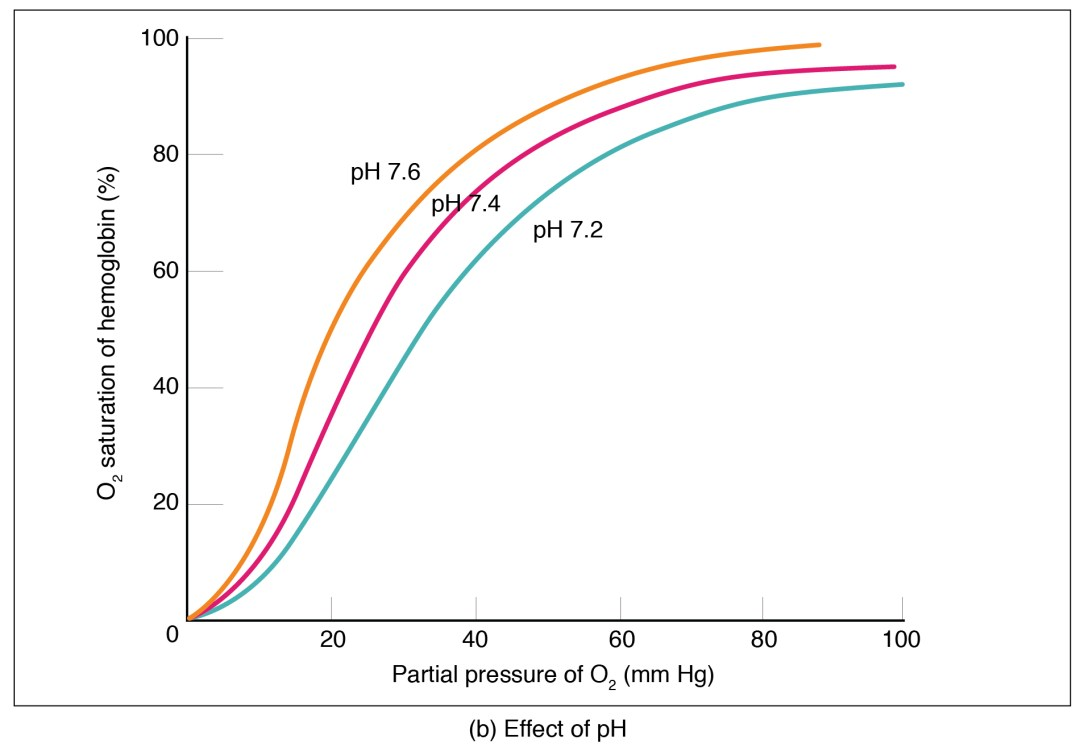 The middle panel shows oxygen saturation versus partial pressure of oxygen as a function of pH.