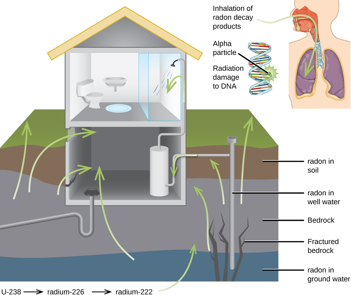 Biological Effects Of Radiation Chemistry