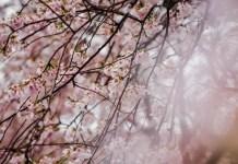 Spring season of life