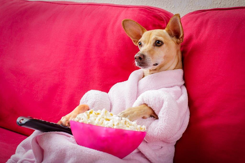dog-friendly-cinema