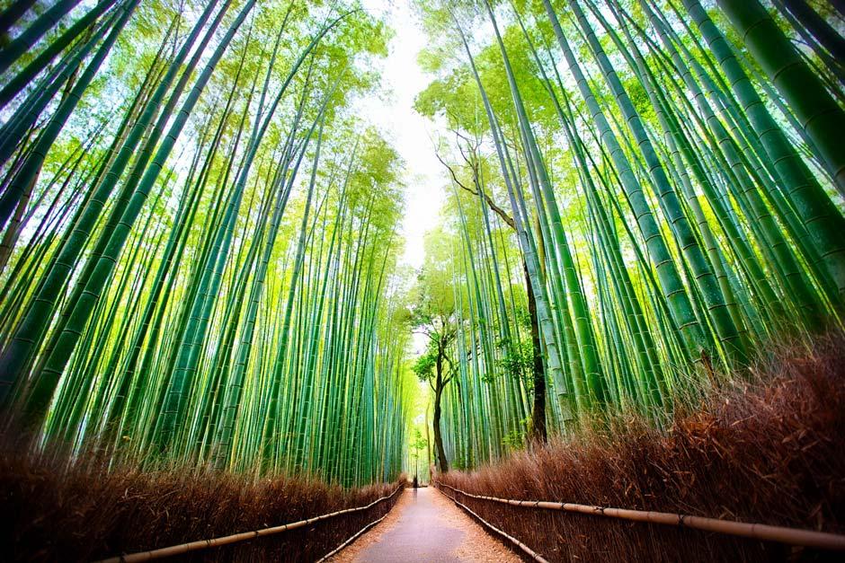 Best Shot Fotografi Alam Jepang