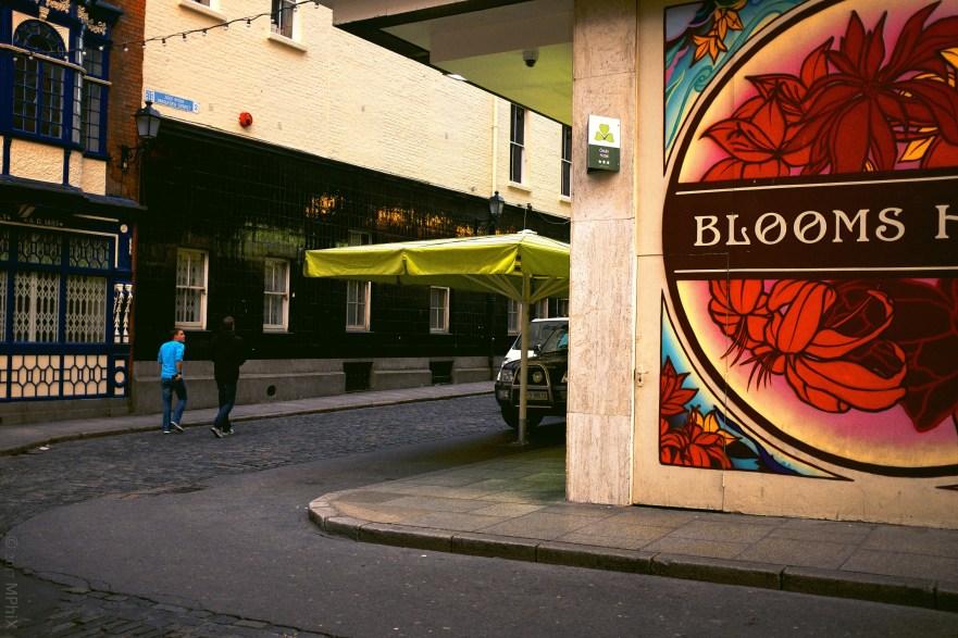 dublin-blooms-3_mphix