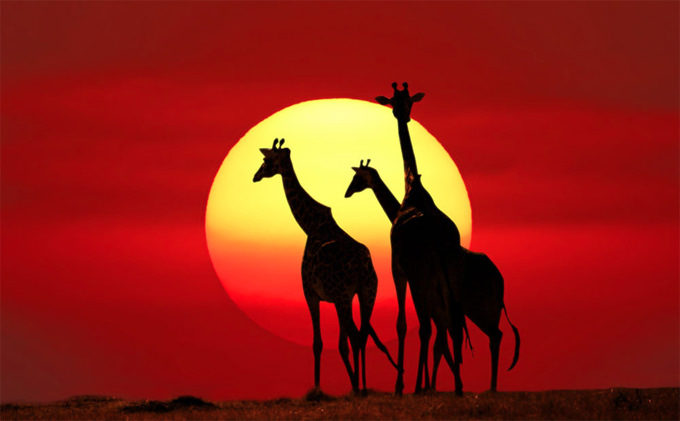 Kenya Safari by PRASIT CHANSAREEKORN