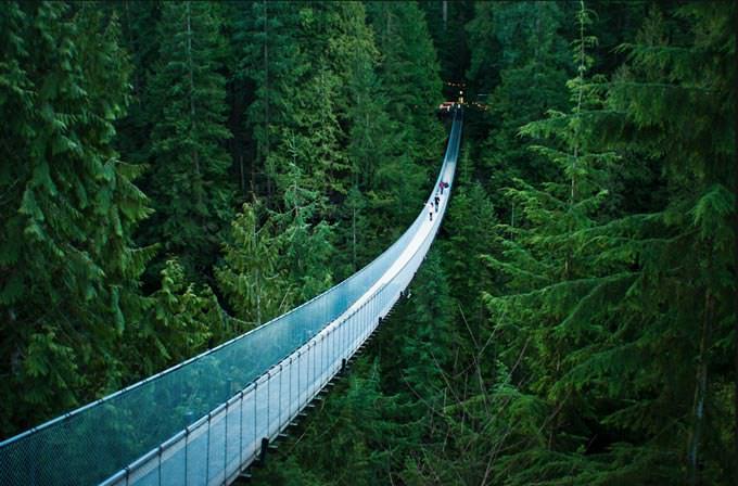 Capilano Suspension Bridge by Michelle Lee