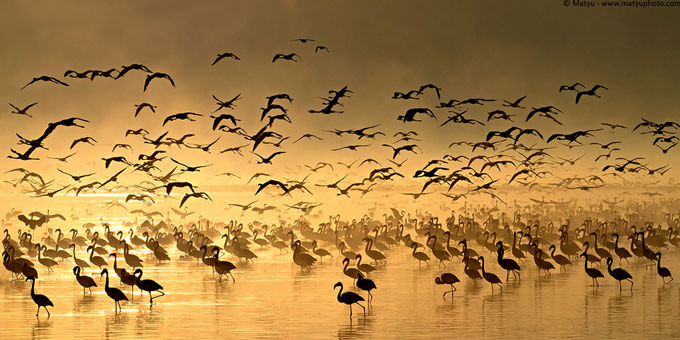 Flight of the Flamingos by Marco Mattiussi
