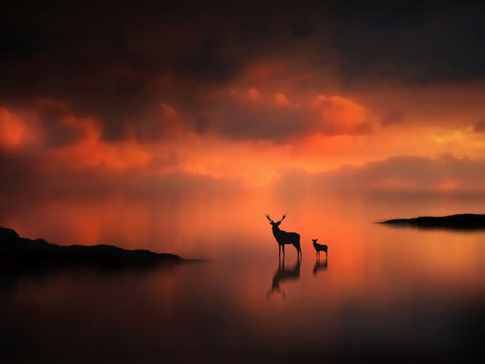The Deer at Sunset by Jenny Woodward