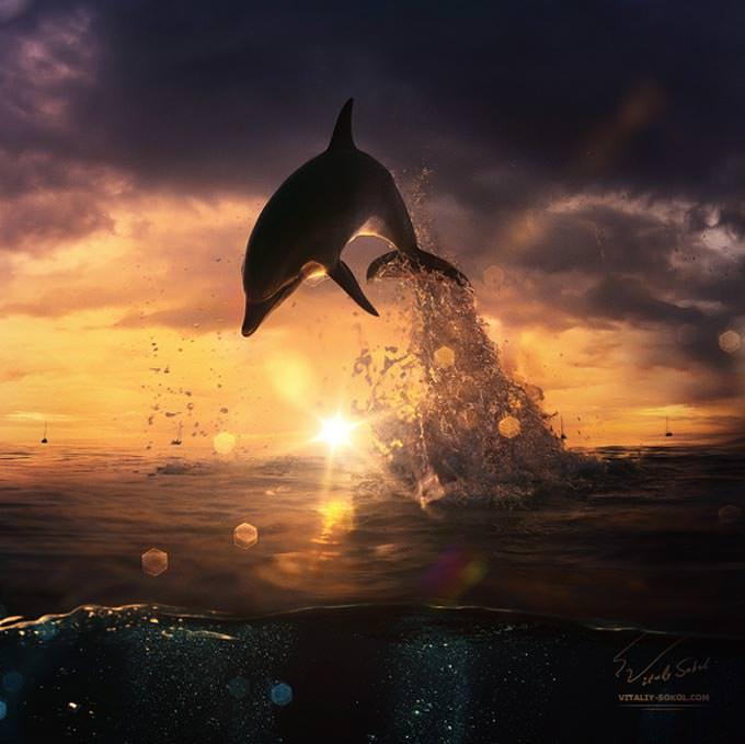 beautiful dolphin jumping from shining water by Vitaliy Sokol