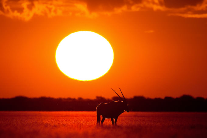 Kalahari Heat by Mario Moreno