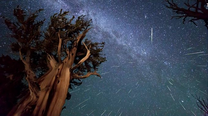 Perseid Meteors over Ancient Bristlecone Pine by Kenneth Brandon