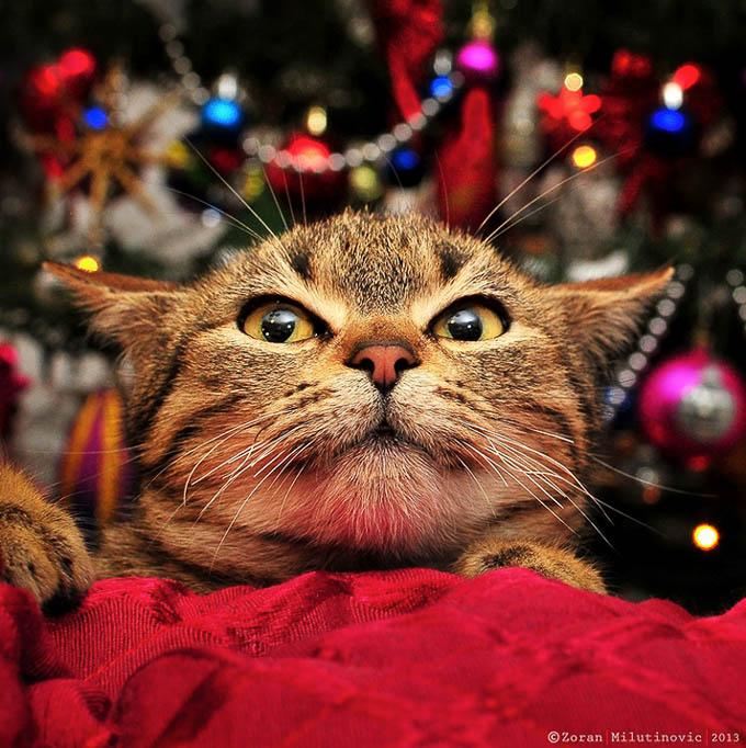 Scared of Christmas Tree! by Zoran Milutinovic