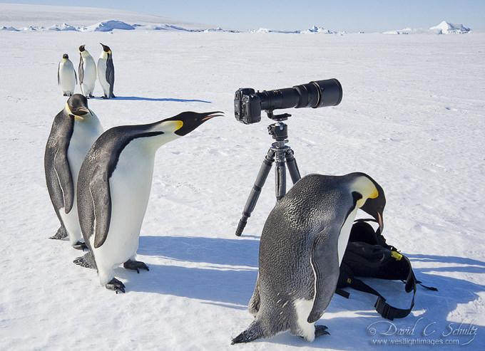 Polar Art Directors by David C. Schultz