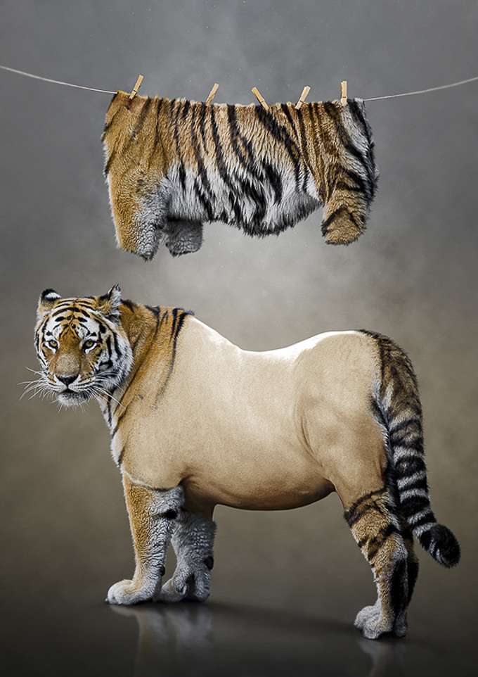 Photo manipulation - Tiger Undressed by Kamil Smala