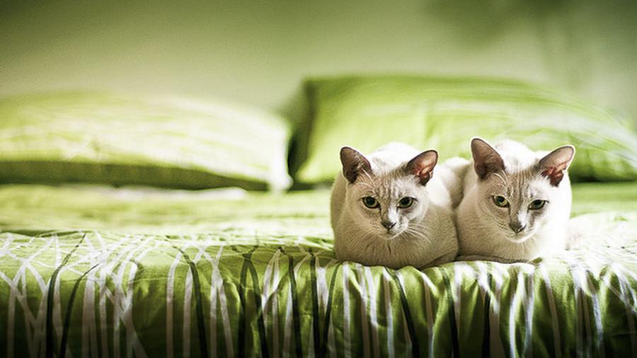 Kittens Green by Simon Smith