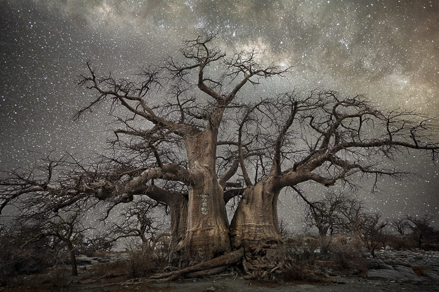 Diamond Nights, 'Fornax' by Beth Moon