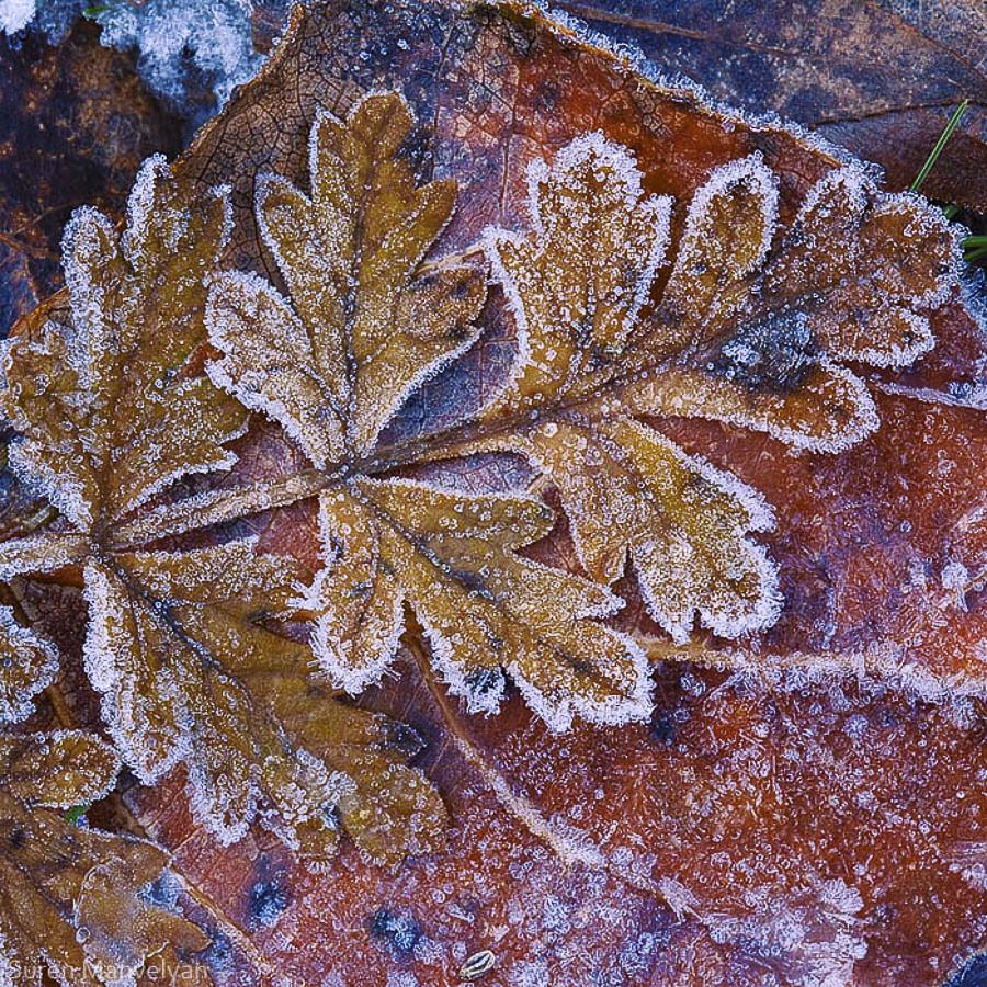 Frost by Suren Manvelyan