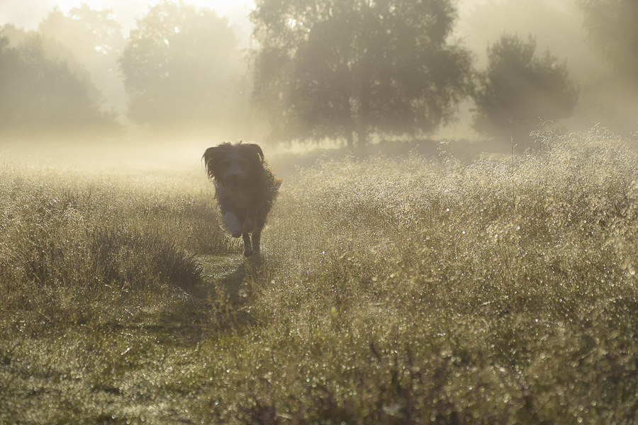 Lion Leaping out of Autumn Mist by pogmomadra