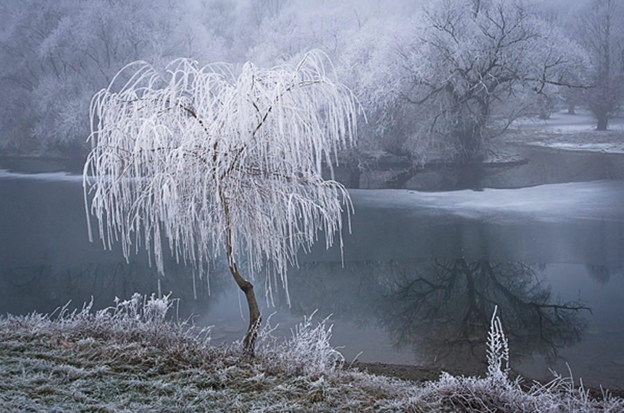 Frost by Patrick Hubschmann