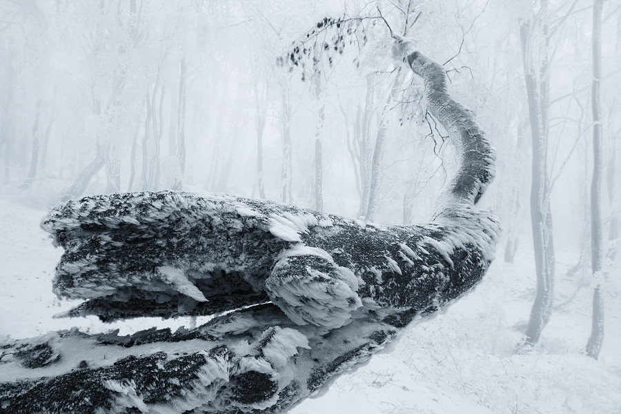 Winter in the Ore mountains by Daniel Rericha