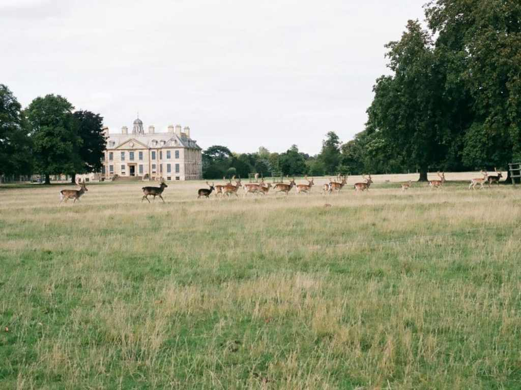 """negative journey ends - Jon Scrimshaw """"the deer hunter"""" at belton house"""
