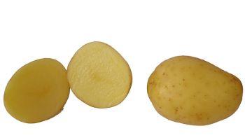 Atemberaubend Wann und wie Kartoffeln pflanzen | phlora.de #EI_53