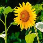 Sommerblumen die man in diesem Jahr unbedingt aussen muss  phlorade