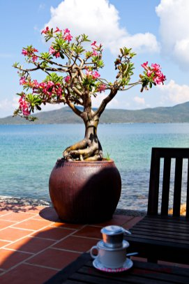 Vietnamese koffie op een eiland (foto: Pho Vietnam © Kim Le Cao)
