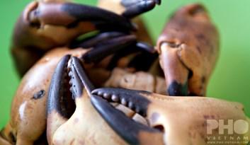Krabscharen (foto: Kim Le Cao © Pho Vietnam)