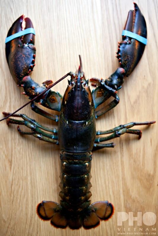 Fresh lobster (foto: Kim Le Cao © Pho Vietnam)