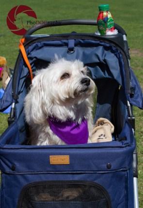 Paws in the Park, 2014, Toronto, Toronto Humane Society, park, fundraiser