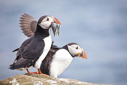 http://www.wildlifeinsight.com/site-guides/wildlife-insight-to-cornwall/wildlife-insight-into-godrevy-point/