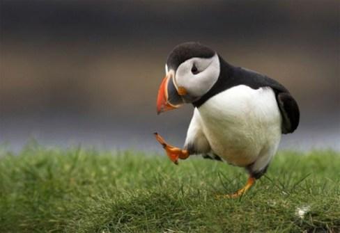 https://www.cornishhorizons.co.uk/enjoy-cornwall/nature/birds