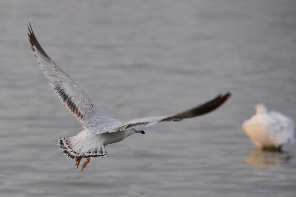 https://heatherandkyle.wordpress.com/2013/02/04/sea-gull-favorites/