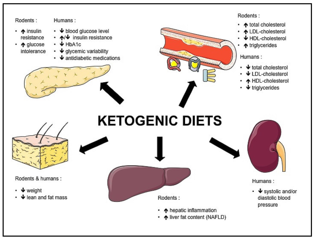 ketogenic (2).jpg