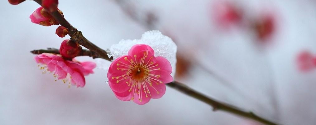 changing of seasons poem