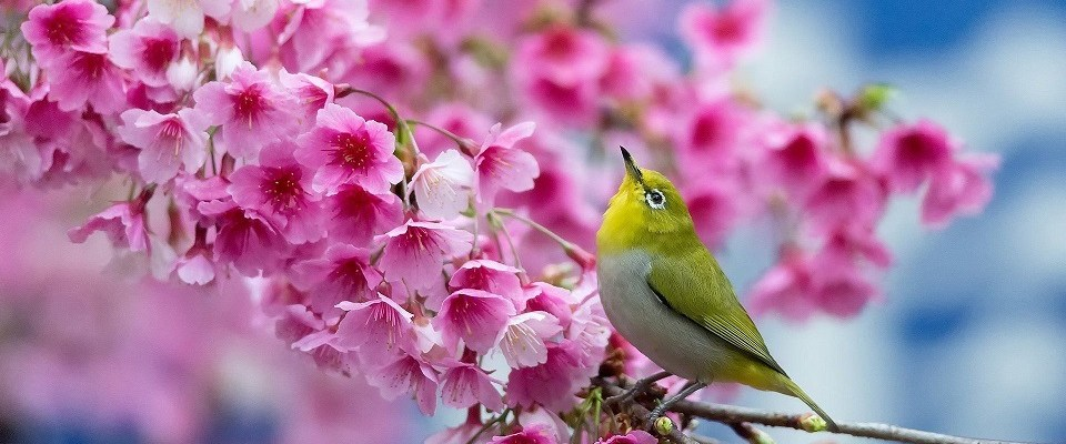 Wishing you beautiful weekend langston hughes