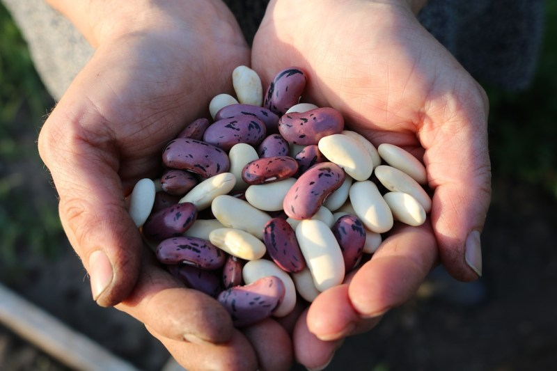 Beans: Foods that help to ease anxiety